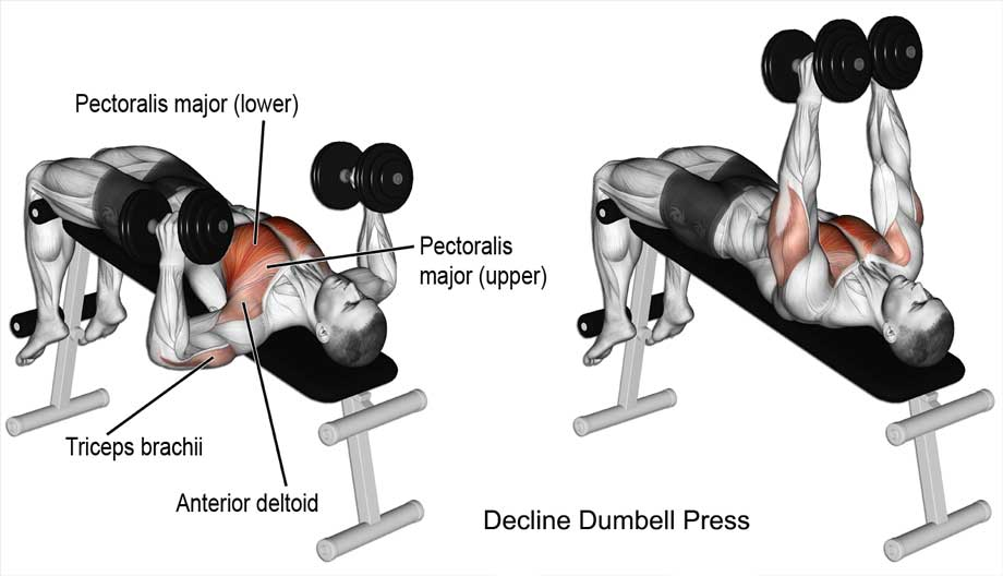 Decline Dumbell Press