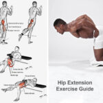 Hip Extension Exercise Guide 2021 [Butt & Glute Exercise] for Men and Women